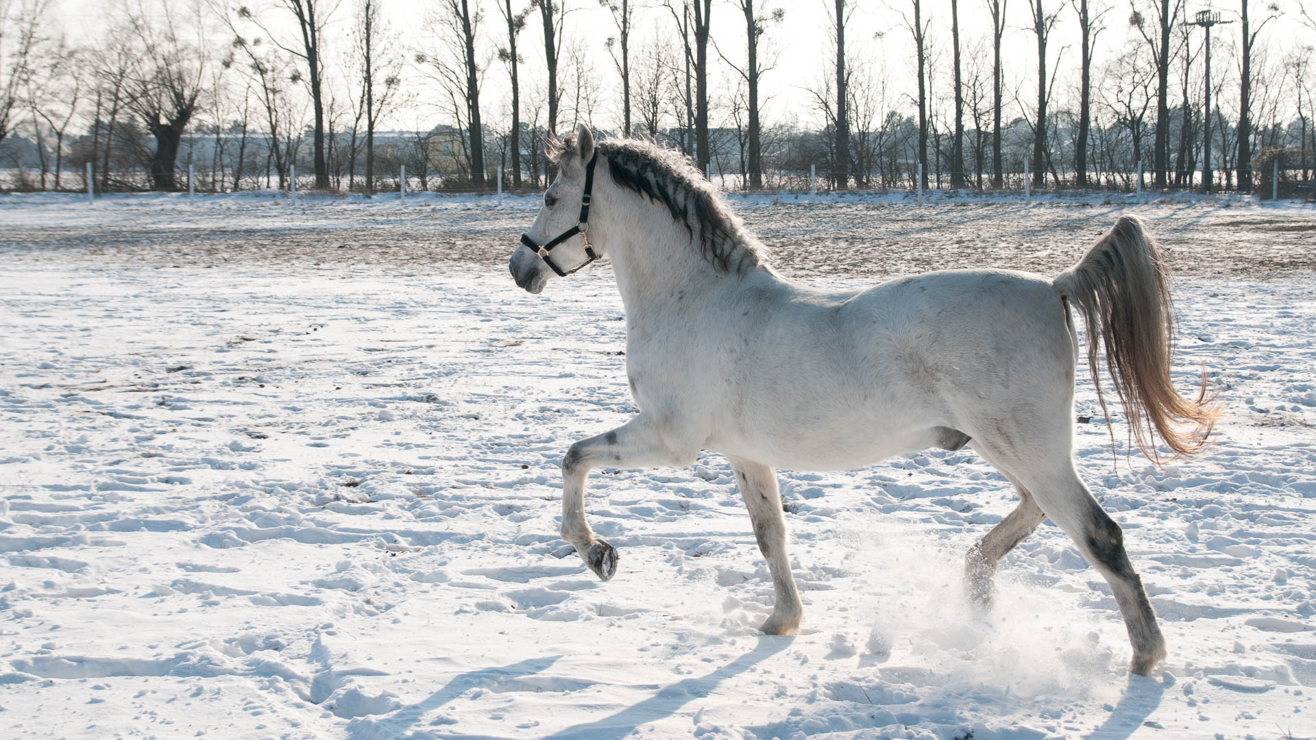 White Beauty (Tierfotografie)